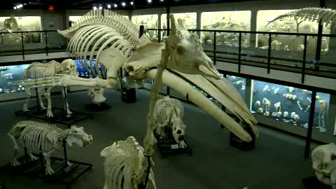 The Museum of Osteology is the only skeleton museum in North America.