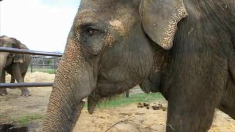 Visit the the second largest herd of Asian elephants in America.