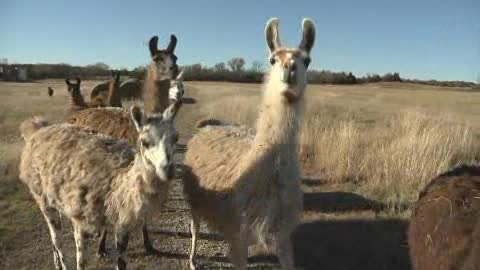 Check out this video of Passow's Camel Farm and petting zoo.
