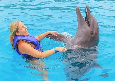 Signature Swim Dolphins- Majahuitas