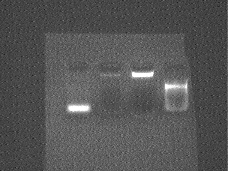 Image:crRNA and R0040 test.jpg