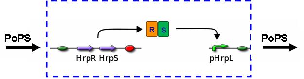 File:IC2007 Hrp Dev1Top.png