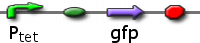 Ptet</sub promoting GFP