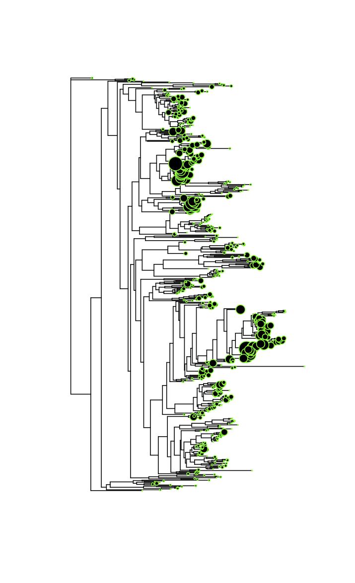 Phylogenetic variation in genomic SSU rRNA copy number