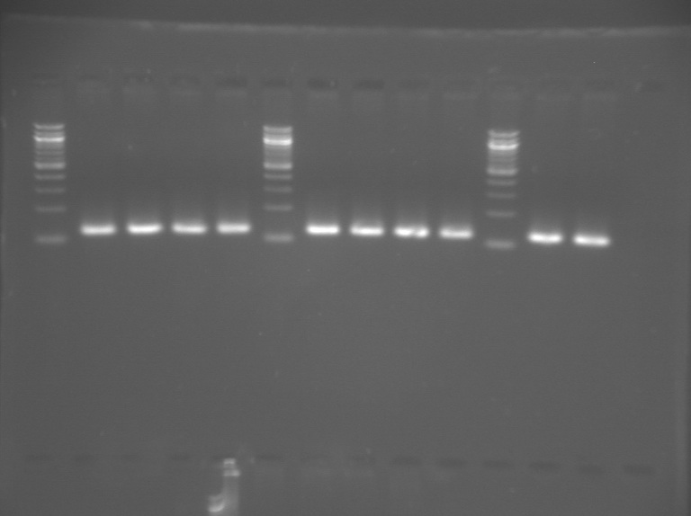 File:S12 M1D5 TR Red-Org-Ylw-Grn-Blu.jpg