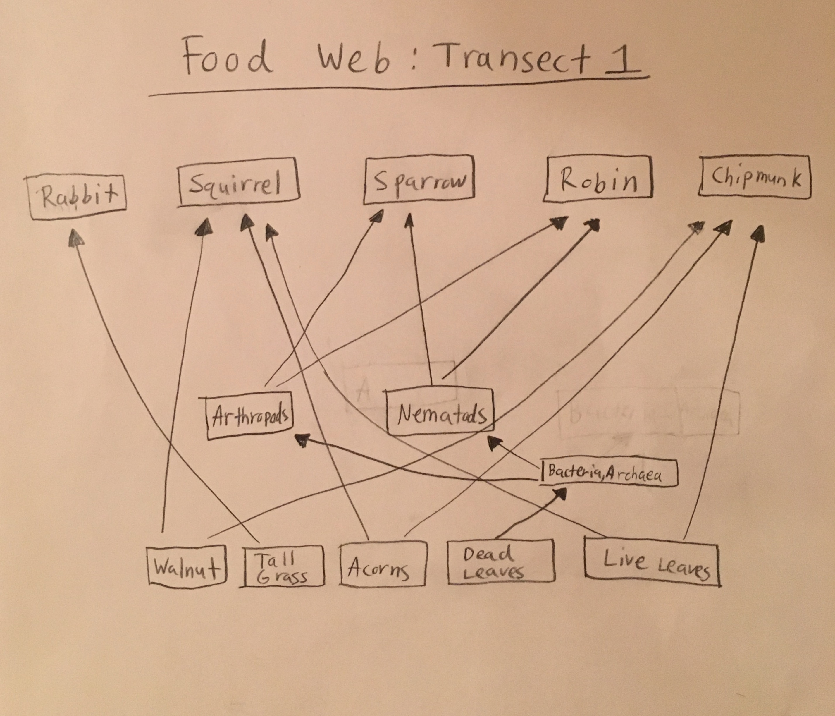 Useryale jt friedmannotebookbiology 210 at au openwetware food web for transect sciox Choice Image