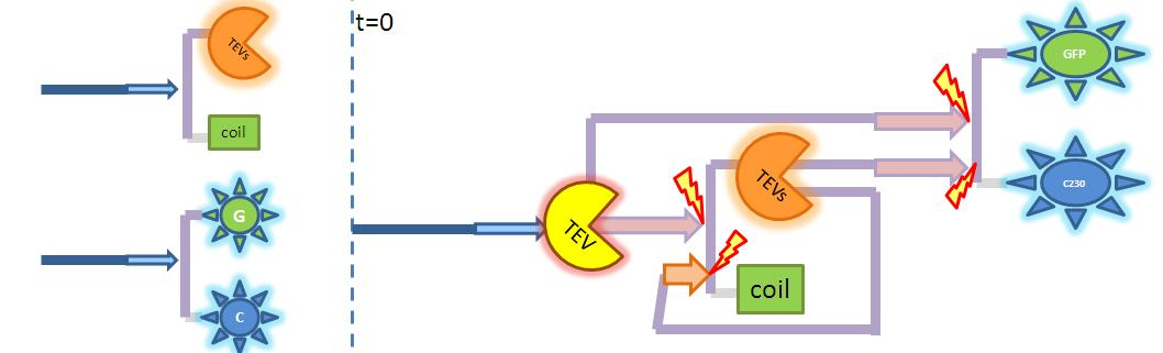 2-step amplification