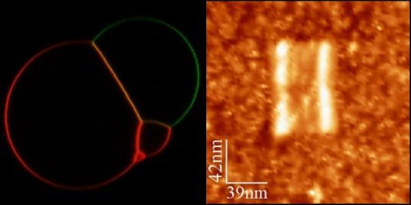 File:BM12 nanosaurs Main Page Result Picture Final.jpg