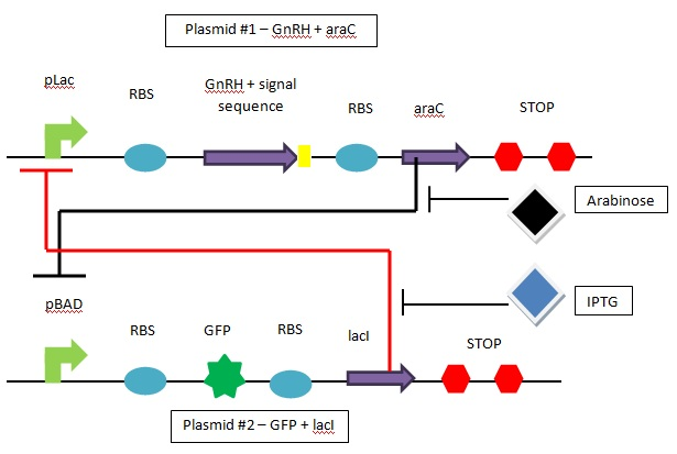 File:BME494 Group5 Overview.jpg