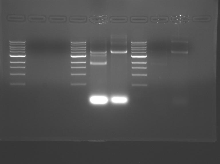File:F09 M2D5 WF Blu-Pnk-Prp-1.jpg