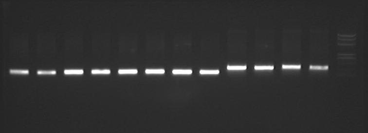 Peking 2007-8-14 PCR-1-8psc101 orit-9-12-R751-Orit.jpg