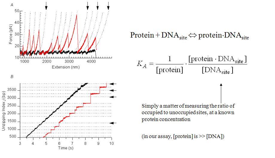 Protein association by unzipping.JPG