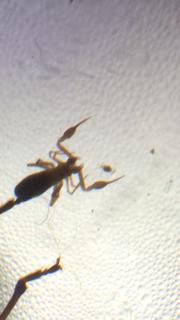 File:ArachnidLB5.PNG