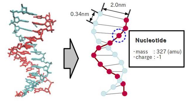 File:Format DNA rasen.jpg