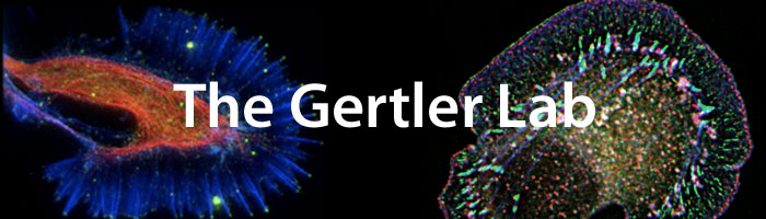 File:GertlerLab.jpg