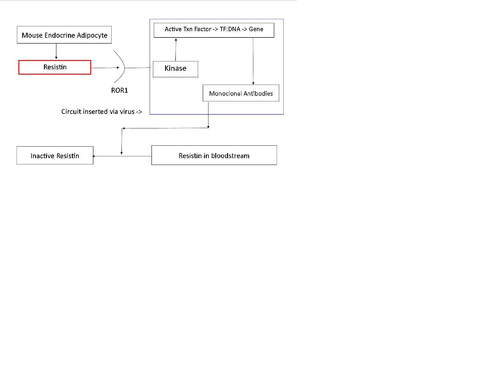 Preproposal Diagram.jpg