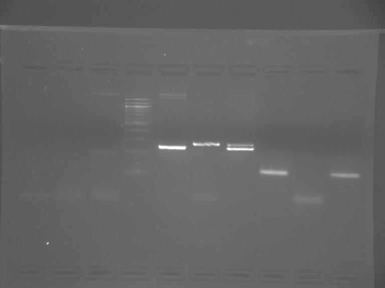 File:S13-M1D7-WF-Gel1-dim.jpg