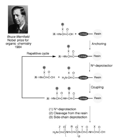 File:Solid phase synthesis.png