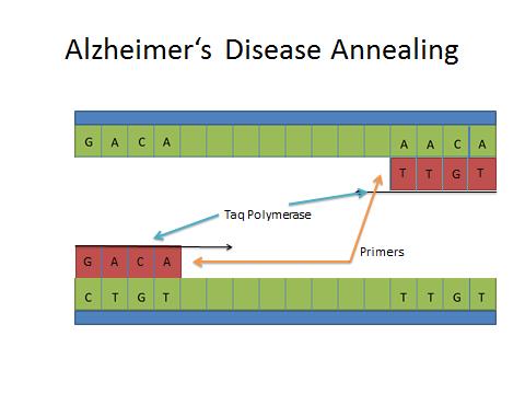 Alzheimer's Annealing DNA.jpg