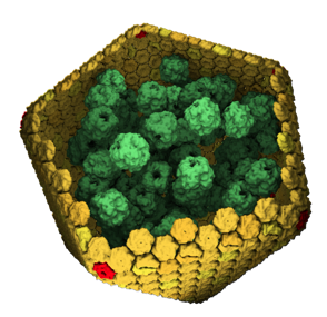File:Carboxysome.png