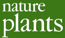 File:Logo natplants.png