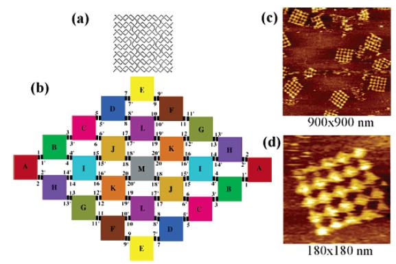 CJ 140104 Self-Assembly of Symmetric Finite-Size DNA Nanoarrays-1.PNG