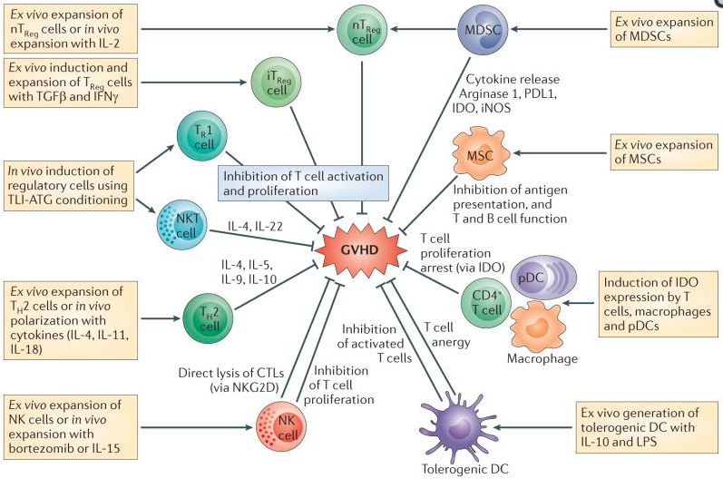 T cell differentiation, and potential target for therapeutics [3]