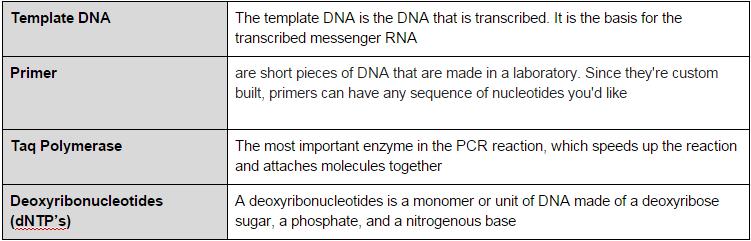 File:PCRAT1.PNG
