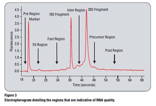 File:RIN RNA.JPG