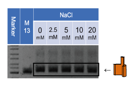 File:1-1(a)-3-wall-NaCl.png