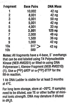 Image:1kb DNA ladder2.jpg