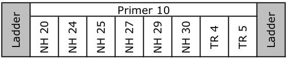 File:20110111 GelSchematicTR10.jpg