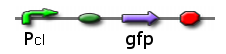 PcI promoting GFP