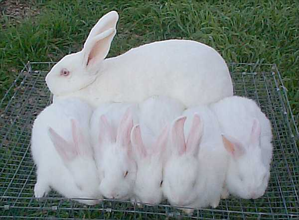 File:Rabbit.jpg