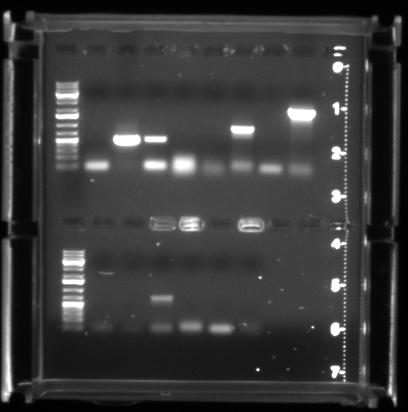 File:PCR 20100318 3sec.jpg