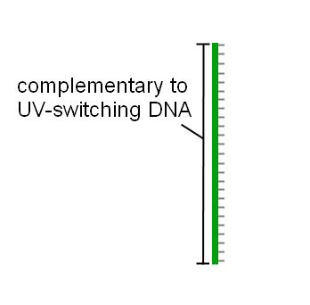 File:Blocking DNA2.png