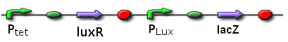 File:ICGEMS sys Ptet luxR Plux lacz.PNG