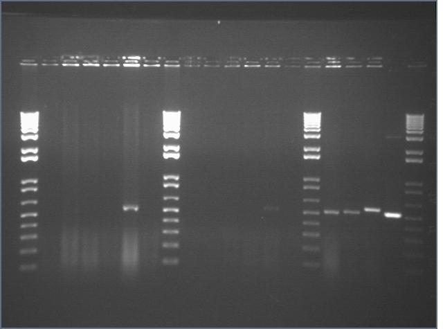File:Stroustrup 9 2 Peng PCR 2.jpg