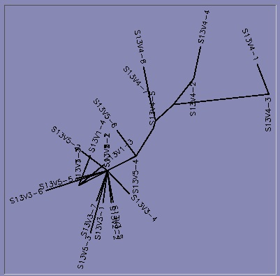 File:Subject13 tree.jpg