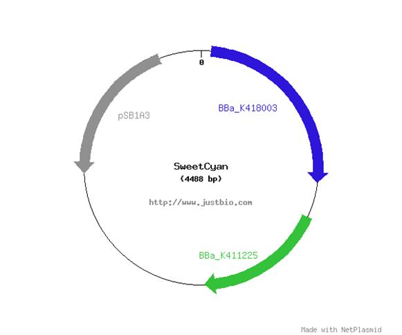 File:Sweet Cyan Plasmid Map.png