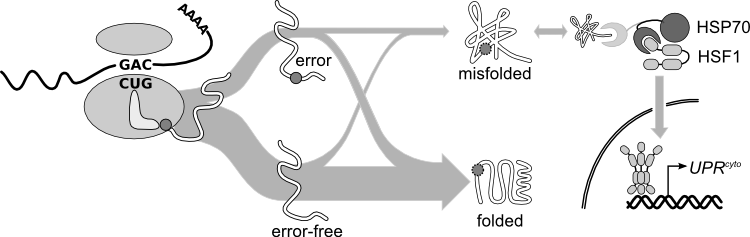 Image:Synthesis-to-misfolding.png