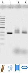 File:BM12 nanosaurs ImageGel1 100 s.jpg