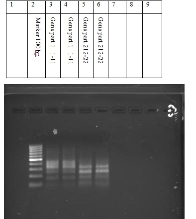 Image:1.pcr products.jpg
