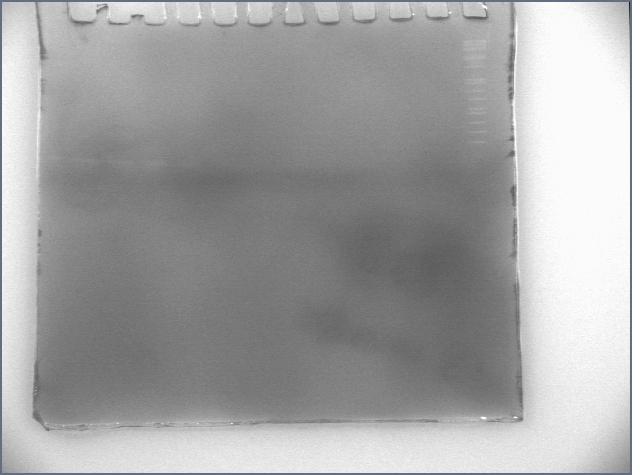 File:20060802 silver.jpg