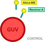 File:BM12 nanosaurs Alexa labeled DNA oligonucleoides as target species CONTROL s.png