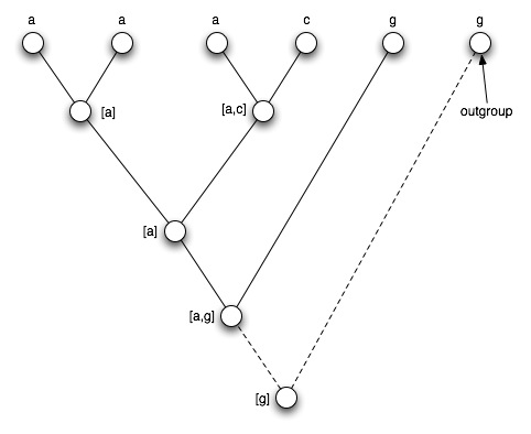 File:L5 tree outgroup.jpg