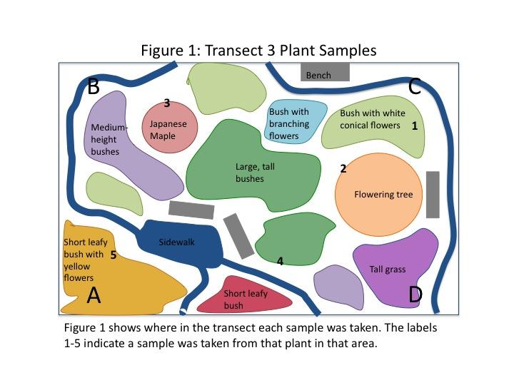 File:Dagum Transect 3 Plant Samples 1.jpg