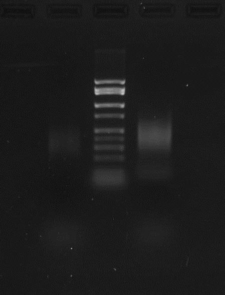 File:Sunbirds1 PCR 2014-05-01.JPG