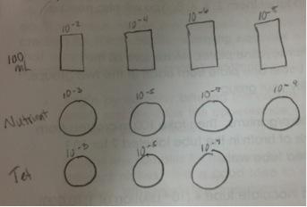 Dilutions2.jpg
