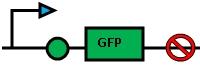GreenBiosensor.JPG